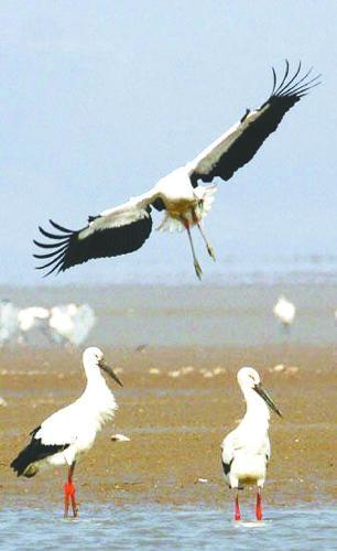 缘起:鄱阳湖是我国的淡水湖,也是世界上的越冬白鹤栖息地.