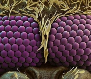 进口电子显微镜下的微观方式