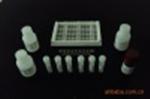 绵羊补体片段3b受体(C3bR)试剂盒
