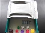 人白细胞弹性蛋白酶ELISA试剂盒技术参数