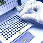 犬细胞间粘附分子1(ICAM-1/CD54)ELISA试剂盒