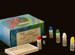 免疫球蛋白G(IgG)ELISA Kit