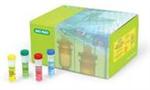 C群脑膜炎IgG抗体测定试剂盒