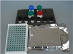 裸鼠蛋白磷酸酶(PP)ELISA��┖性��b�M口