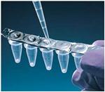 犬白细胞分化抗原8(CD8)ELISA 试剂盒