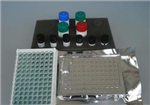 大鼠凝血因子Ⅻ(FⅫ)ELISA试剂盒