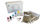 上海生物科研所兔晚期糖基化终末产物受体(RAGEAGER) ELISA试剂盒现货