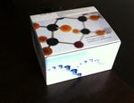 高灵敏度大鼠载脂蛋白B100(Apo-B100) ELISA试剂盒,现货供应