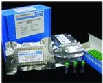 大鼠转化生长因子β1(TGF-β1) ELISA试剂盒广东免费代测