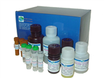 高灵敏度大鼠组织型纤维溶酶激活剂(t-PA) ELISA试剂盒,现货供应