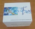 裸鼠克拉拉细胞蛋白(CC16) ELISA试剂盒