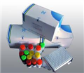 国产供应兔子凝血因子Ⅱ试剂盒