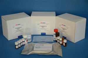 人脑源性神经营养因子(BDNF) ELISA试剂盒