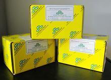 犬主要组织相容性复合体(MHC/DLA)ELISA 试剂盒