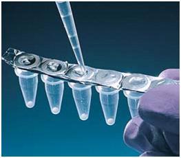 犬白細胞分化抗原8(CD8)ELISA 試劑盒