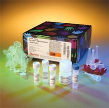 兔血管紧张素Ⅱ(ANG-Ⅱ)ELISA 试剂盒