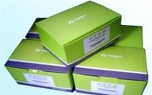 裸鼠克拉拉细胞蛋白(CC16) ELISA 试剂盒