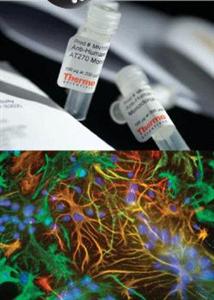 磷酸鹽葡萄糖腖水培養基