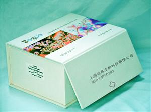 大鼠5羟色胺(5-HT)ELISA试剂盒