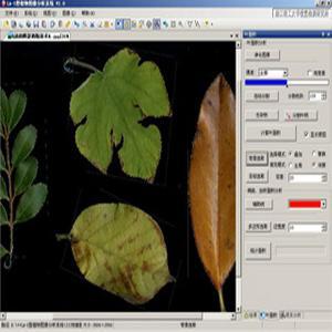 陕西 山西 甘肃 新疆 银川 西宁低价热销植物图像分析系统厂家直销终身免费维修邮